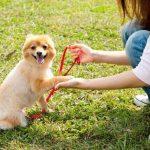 英語で犬のしつけ方