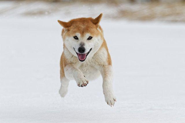 犬の散歩のしつけ